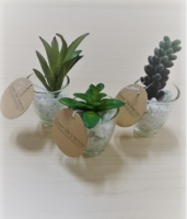 Succulent Plants Cup Glass With White